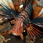 Lion-fish  by James Parker
