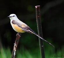 Bird on a Fencepost by Richard Skoropat