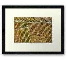 vineyard #1 Framed Print