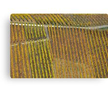 vineyard #1 Canvas Print