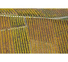 vineyard #1 Photographic Print