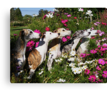 Whippets In Pose Canvas Print