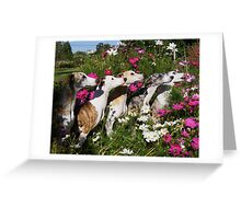 Whippets In Pose Greeting Card