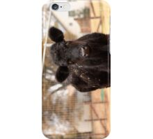 Junior's first day at the sanctuary iPhone Case/Skin