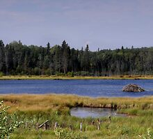 Beaver Dam - Wellman Lake by TracyL72