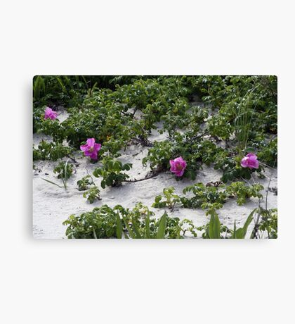 Blooming Dune  Canvas Print