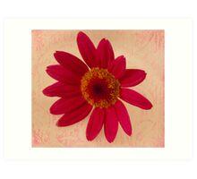 Vibrant Pink Gerbera Daisy  Art Print