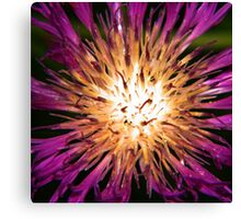 Light From the Inside Canvas Print