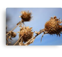 Weeds in the Wind Canvas Print