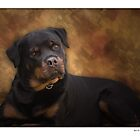 Dog Portraits  by rivid
