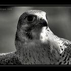 Hawk by Chris Odchigue