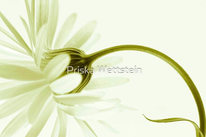 artless by Priska Wettstein