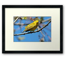 You Looking at Me? /Yellow Warbler Framed Print