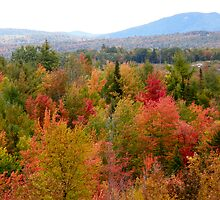 Maine Autumn Foliage by Judith Hayes