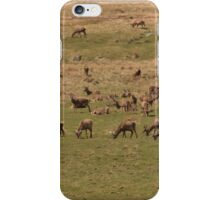 Red Deer Herd at Loch Muick iPhone Case/Skin