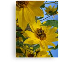 Busy as a Bumble Bee Canvas Print