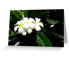 Hawaiian Sweetness Greeting Card