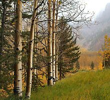 Aspen Trees on a Misty Foggy Day in Fall by Bob Spath