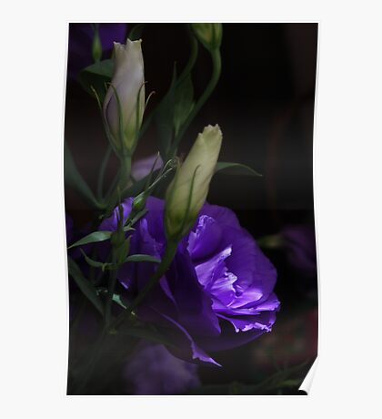 Lithianthus mystery Poster