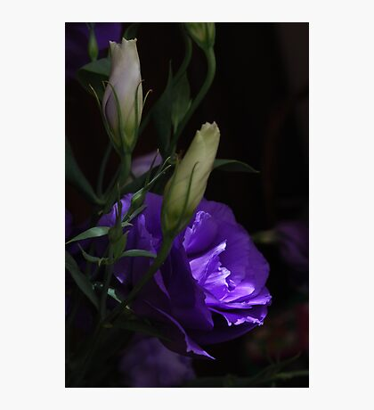 Lithianthus mystery Photographic Print