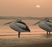 Pelican Sunrise by Jenny Dean