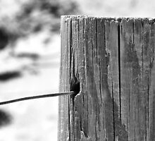 Beach Fence Post by TeAnne