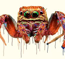 Spider Psychedelic by ClaireCrisci