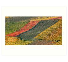 vineyard #2 Art Print