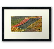 vineyard #2 Framed Print