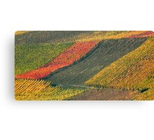 vineyard #2 Canvas Print