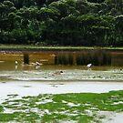 Tidal river seagulls by lilleesa78