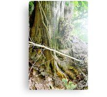 Mystical Tree Studies 2. Canvas Print