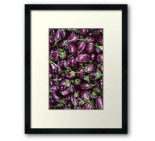 Aubergine, Eggplant, Brinjal, Terong Framed Print