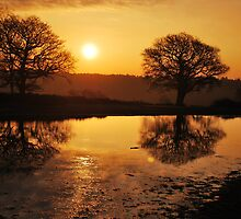 New Forest Sunrise by Paul Ritchie