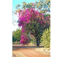 Bouganvillea, Katherine, Northern Territory, Australia Photographic Print