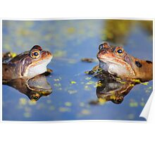 Frogs and Reflection Poster