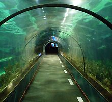 Fish tank tunnel by DutchLumix