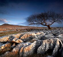 Limestone Pavement by Jeanie