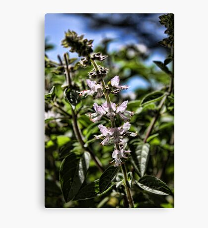 Herbal Flower Canvas Print