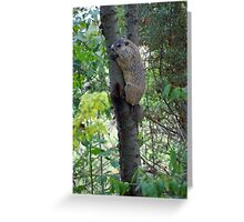 Groundhog in a tree Greeting Card