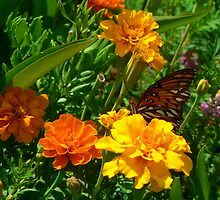 """""""Butterfly and the Marigolds"""" by franticflagwave"""
