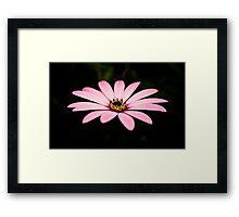 Pinkies Framed Print