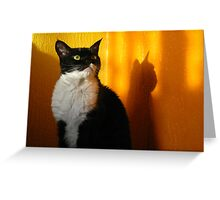 Cat One Greeting Card