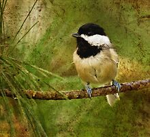 black capped chickadee  4  2011 by RosiesPhotos