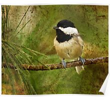 black capped chickadee  4  2011 Poster