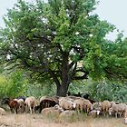 Sheep under a Large Tree by Sofia Solomennikova