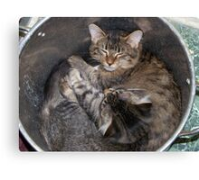 potted kitties Canvas Print