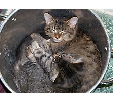 potted kitties Photographic Print