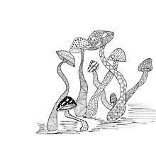 Mushrooms by Camilla Juliana Gonzalez