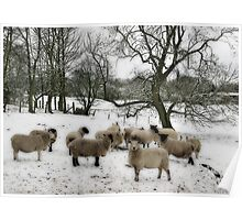 Snowy the Sheep Poster